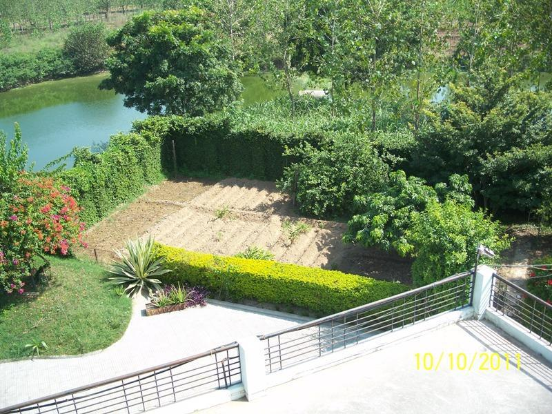 SSG Kitchen garden