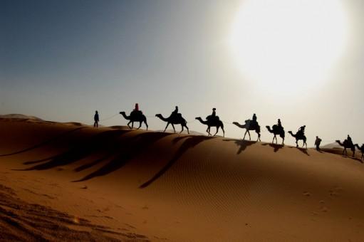 Camel_Caravan